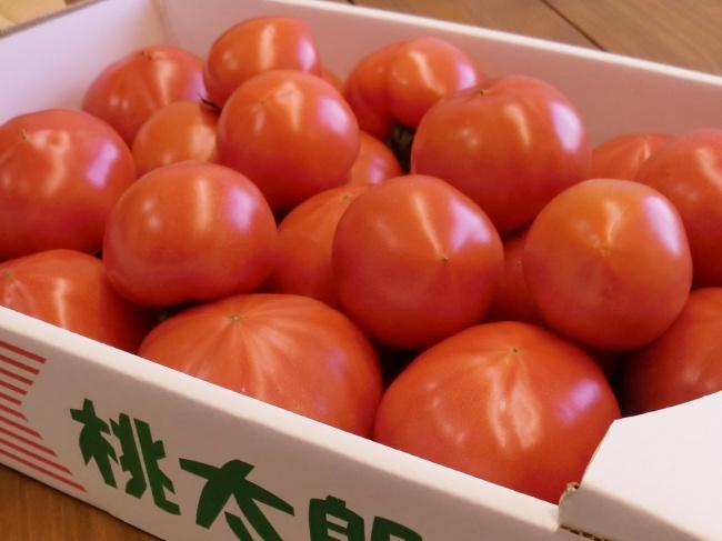 岡田ファームの桃太郎トマト